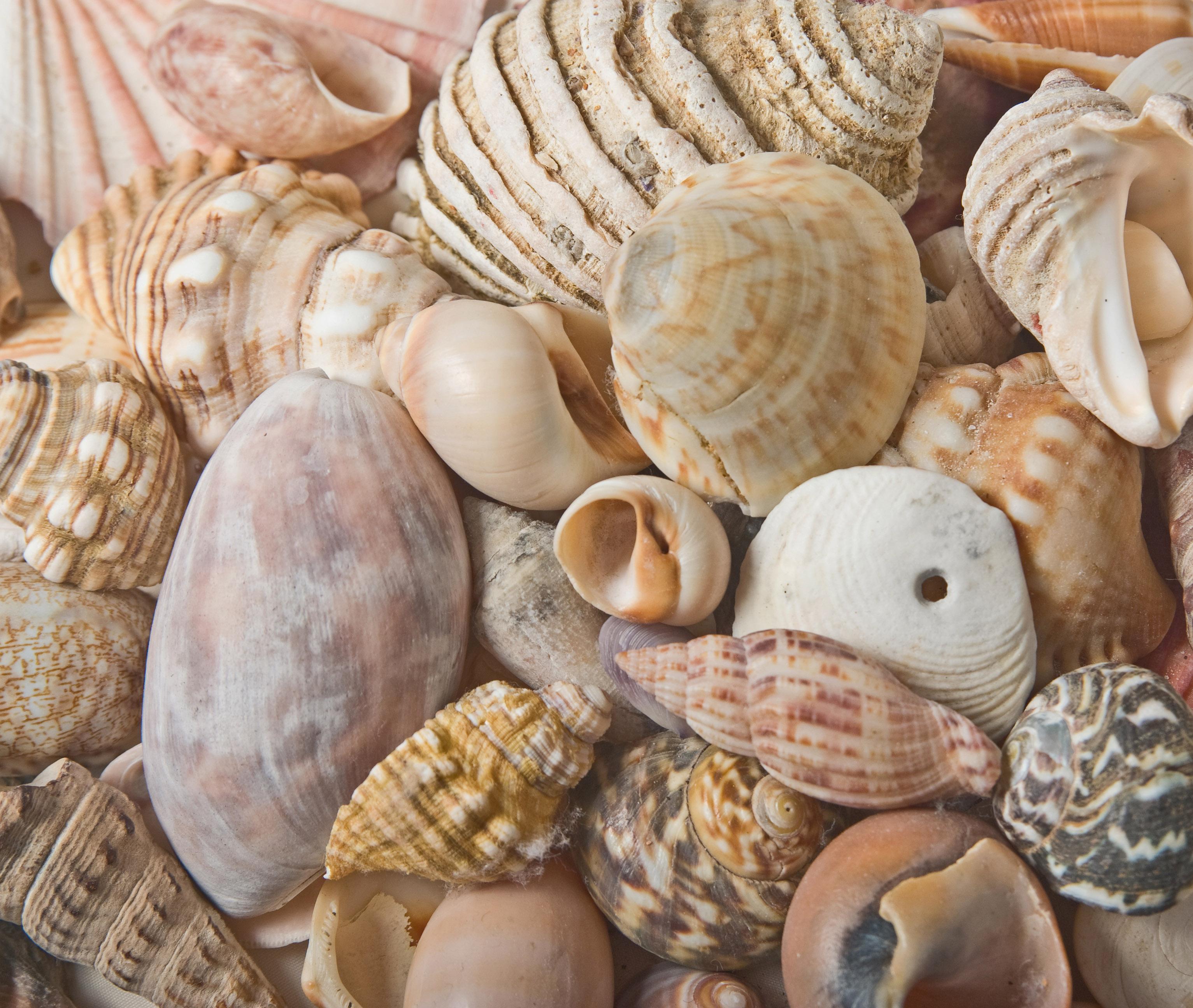 Seashells Background Image Www Myfreetextures Com Free