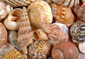 Seashells background image