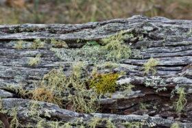 old mossy log background image