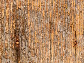 An orange wood background texture