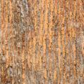 old orange wood background texture