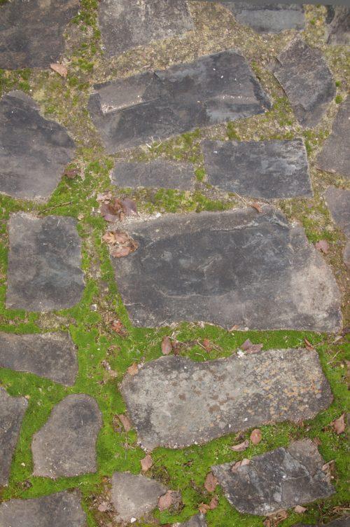 stone path pavers and moss background