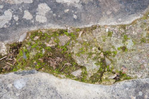 closeup image of stone path pavers and moss
