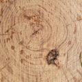 cut tree log wooden texture