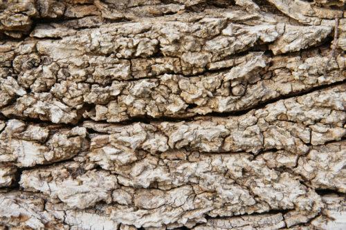 rough tree bark high resolution background texture