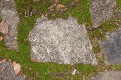 closeup of stone path pavers and moss