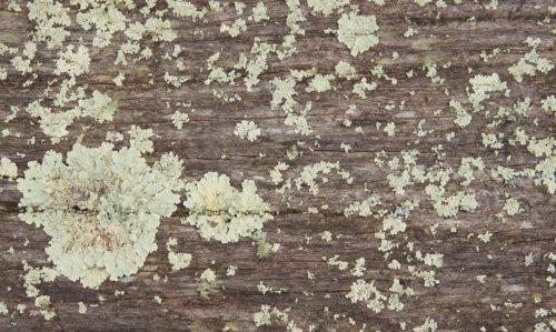 moss on wood log background image