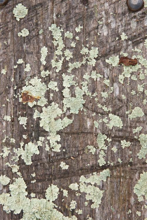 mossy wood log background image