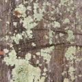 mossy wood background image