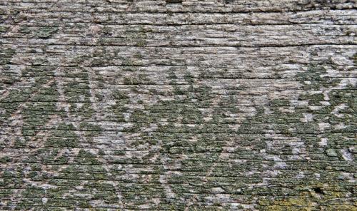 landscape green grunge painted wooden background texture