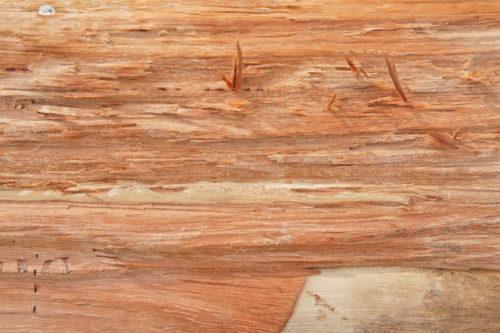 fresh cut wood texture
