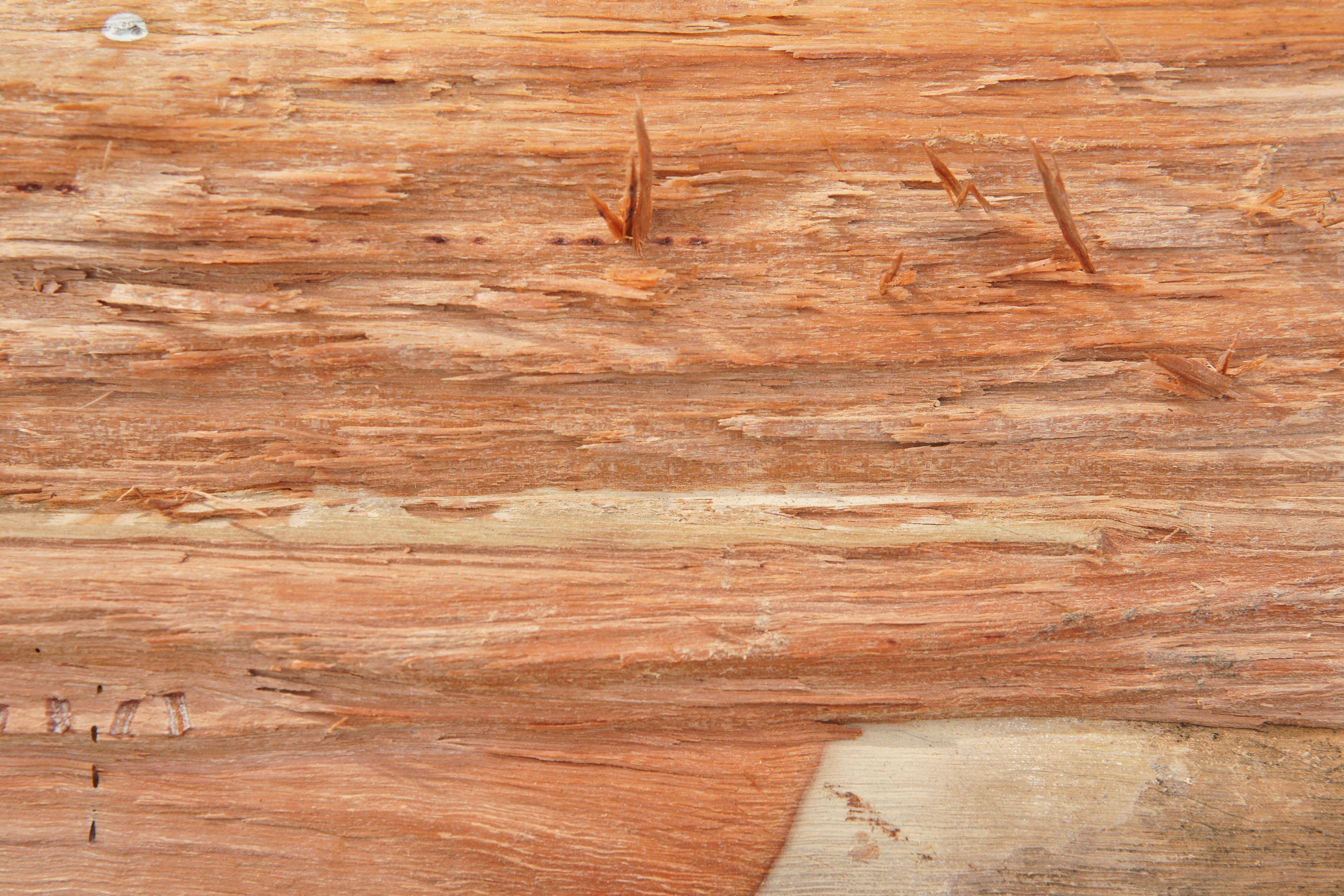 Cut Wood Texture Www Myfreetextures Com Free Textures