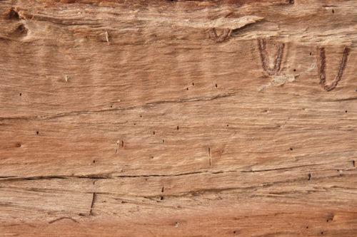 Cut log background texture