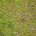 grass and ground background