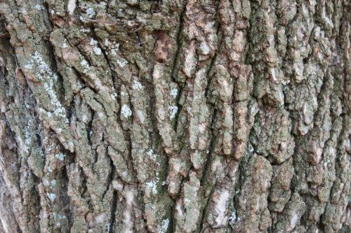 rough tree bark wood free texture
