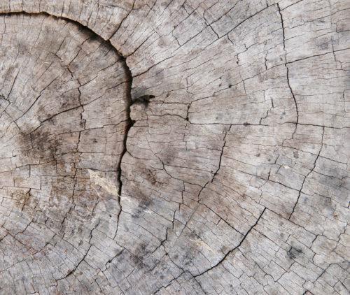 tree stump cut wood texture