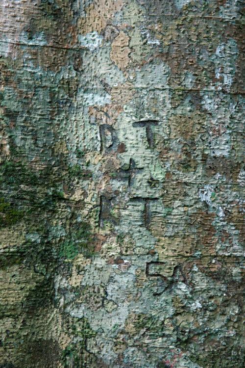 green tree bark texture