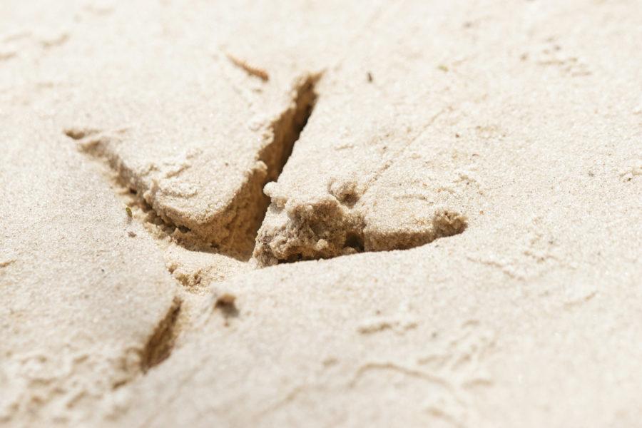 deep bird footprint in the sand texture