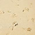 footprints at beach texture