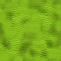 green iquana lizard or snake skin