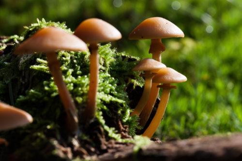 beautiful nameko mushroom wallpaper