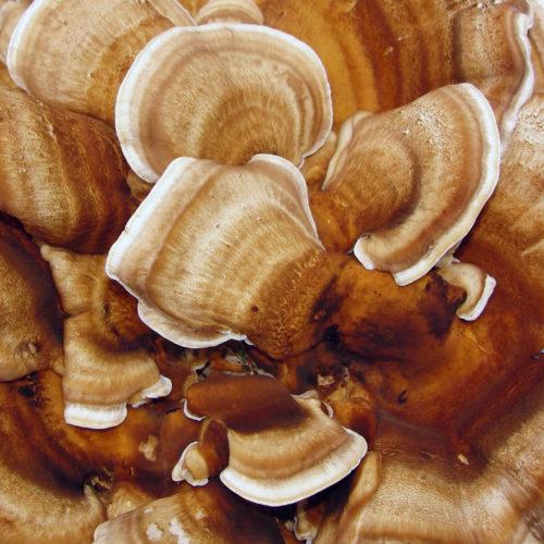 big mushroom background texture