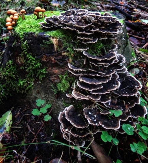 black mushroom background