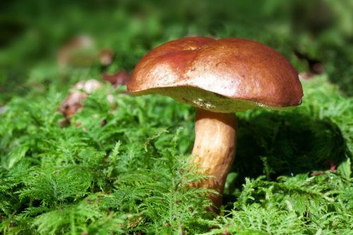 brown mushroom in green photo