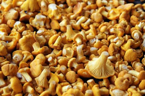 chanterelles mushroom background