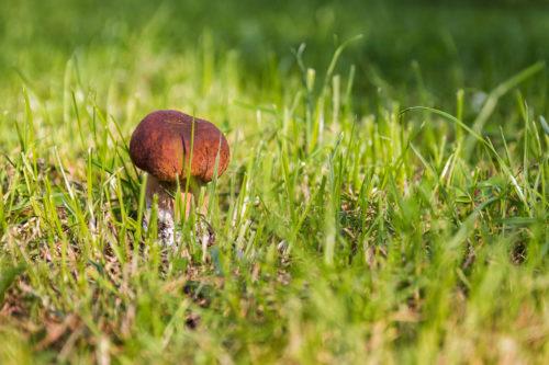field mushroom background photo