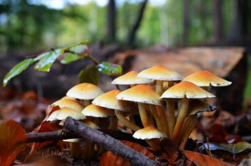 forest mushroom wallpaper