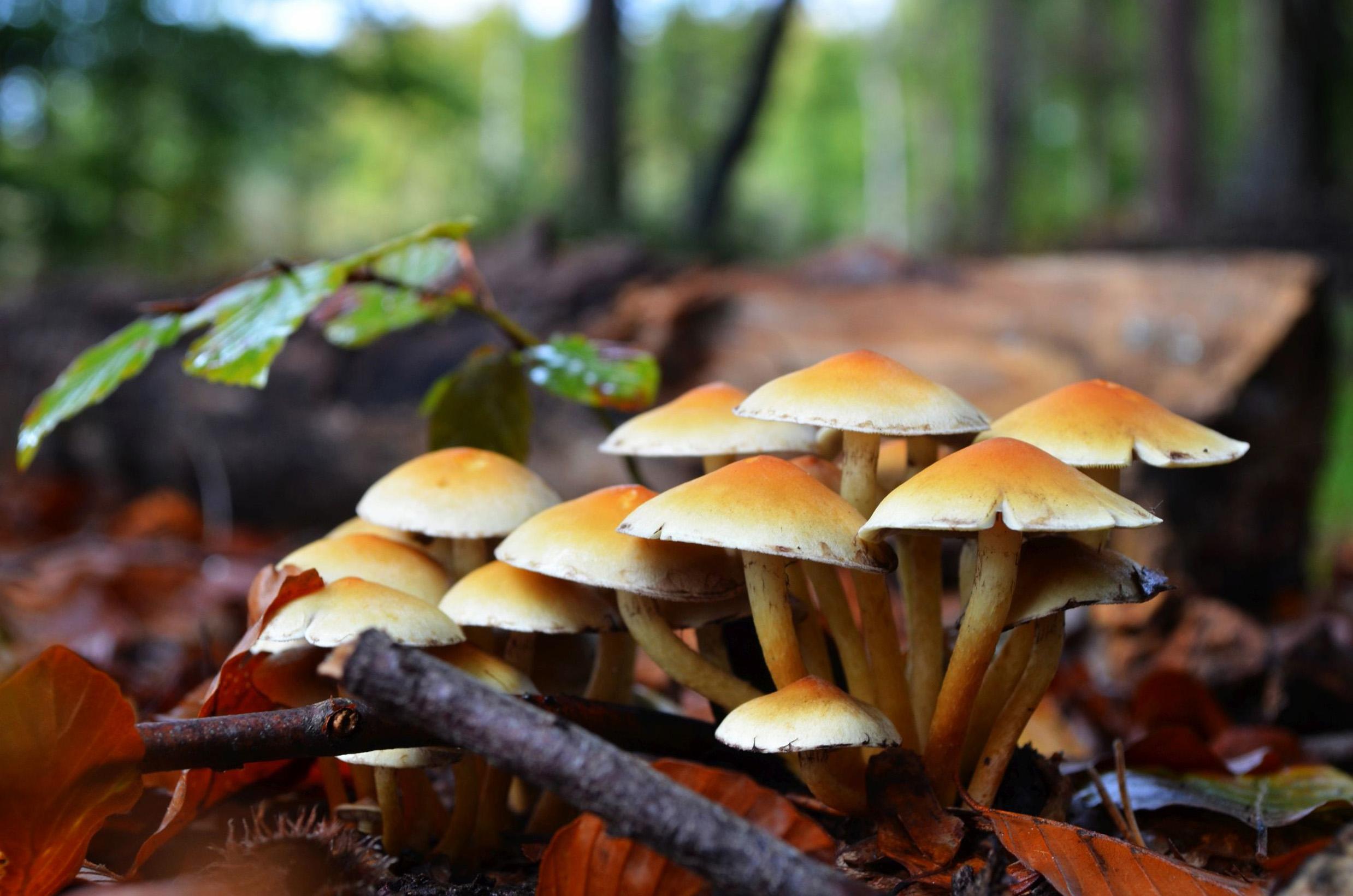 94 Fantastic Free Images For A Mushroom Wallpaper