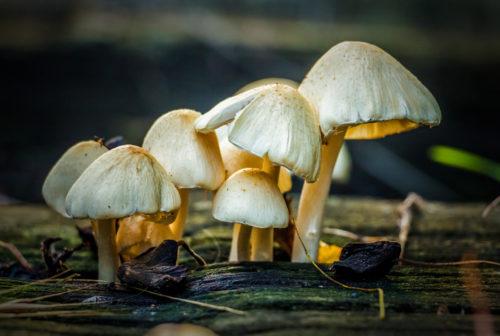great mushroom picture