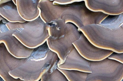 grey mushroom texture