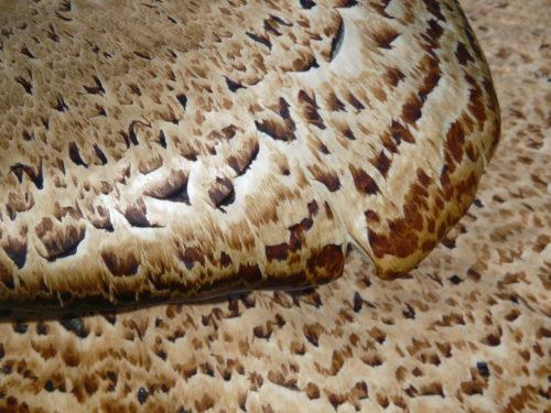 macro shot of mushroom background