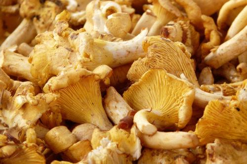 mushroom background texture image