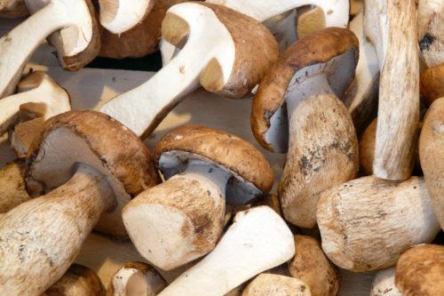 mushroom background texture