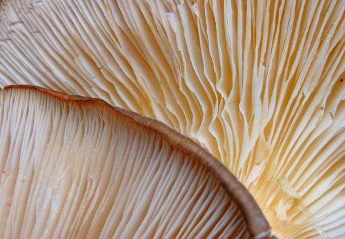 mushroom free texture image