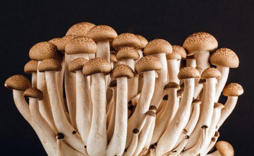 mushroom on black