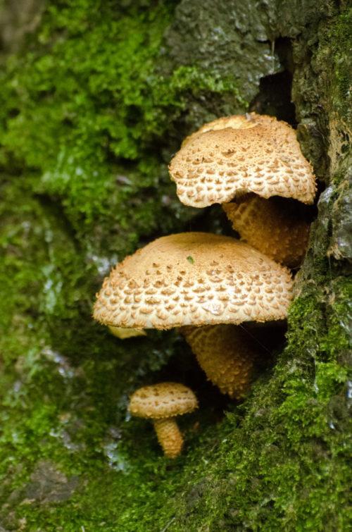 mushrooms peeking out