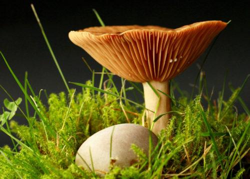 perfect mushroom wallpaper