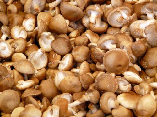 shiitake mushroom texture