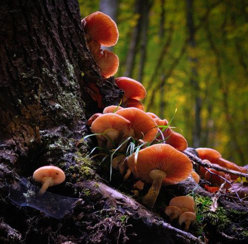 tree root mushroom background wallpaper