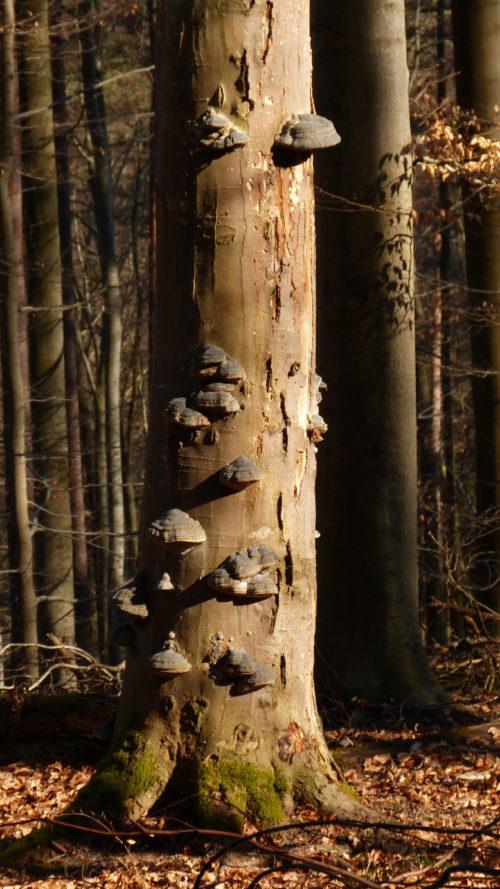 tree with mushrooms photo