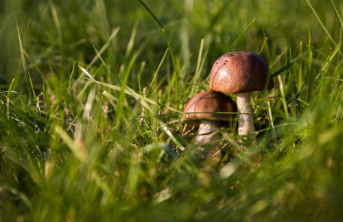 two mushroom in field photo