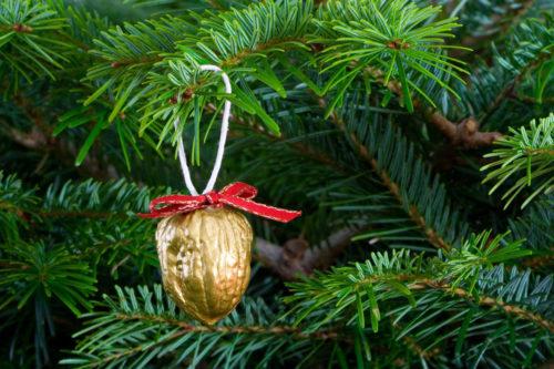 gold walnut hanging on tree