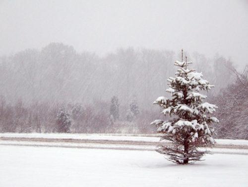photo of tree in snow
