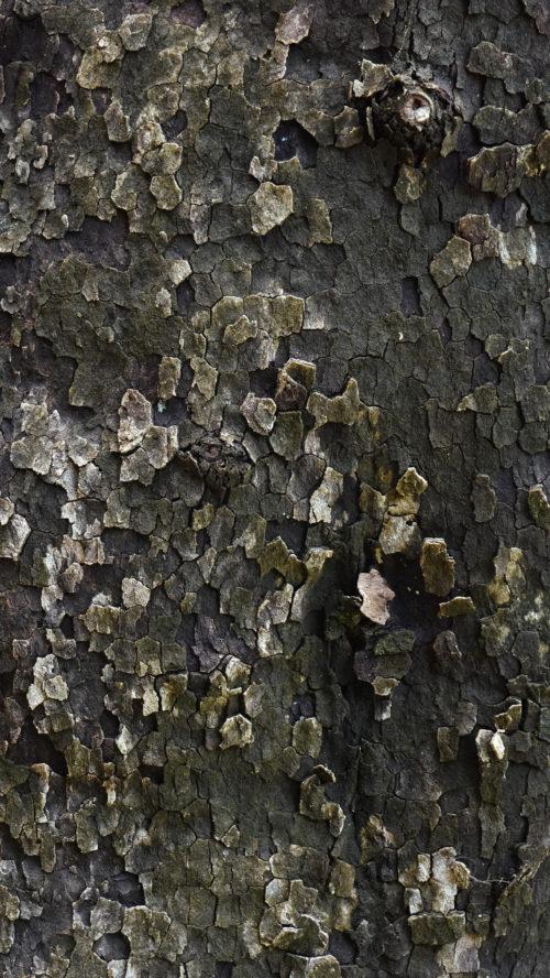 Dark plane tree bark texture.